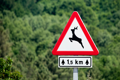 Wild animals warning road sign, forest background.