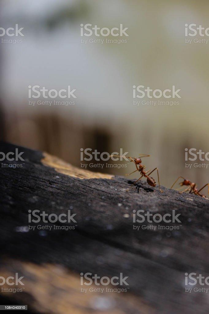 Wild Ant stock photo
