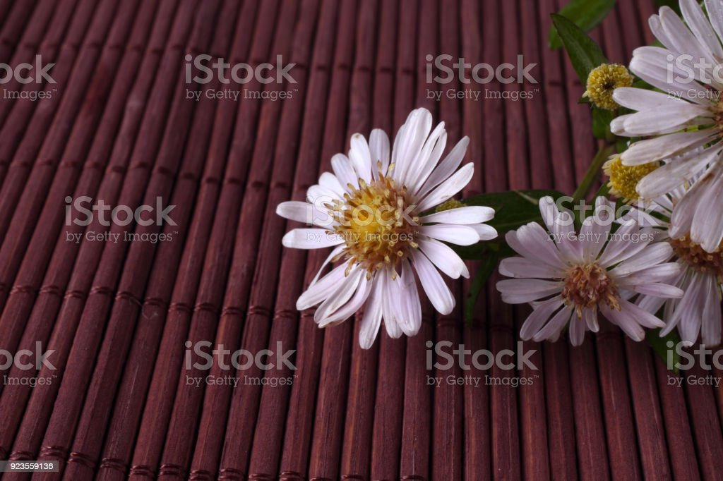 Wild asters on bamboo background stock photo