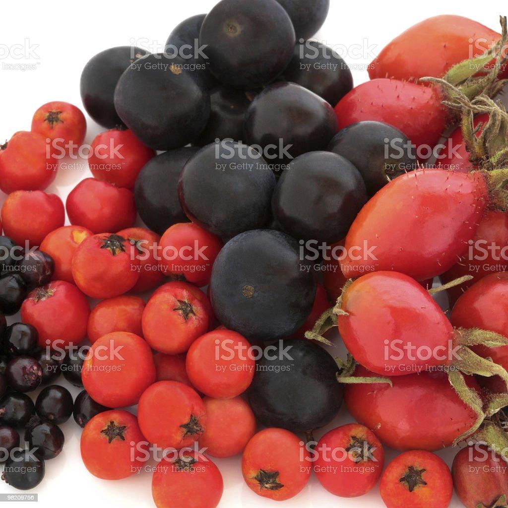 Wild Autumn Fruit royalty-free stock photo