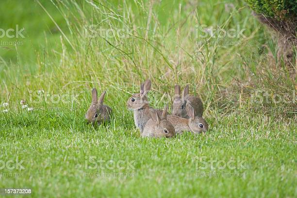 Wild baby rabbits picture id157373208?b=1&k=6&m=157373208&s=612x612&h=36irw uih4jrg5ivfoeatpk5boi6ivinss0gxahujia=