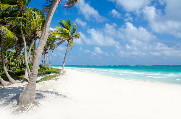 wild beach at tulum - playa del carmen stock photos and pictures