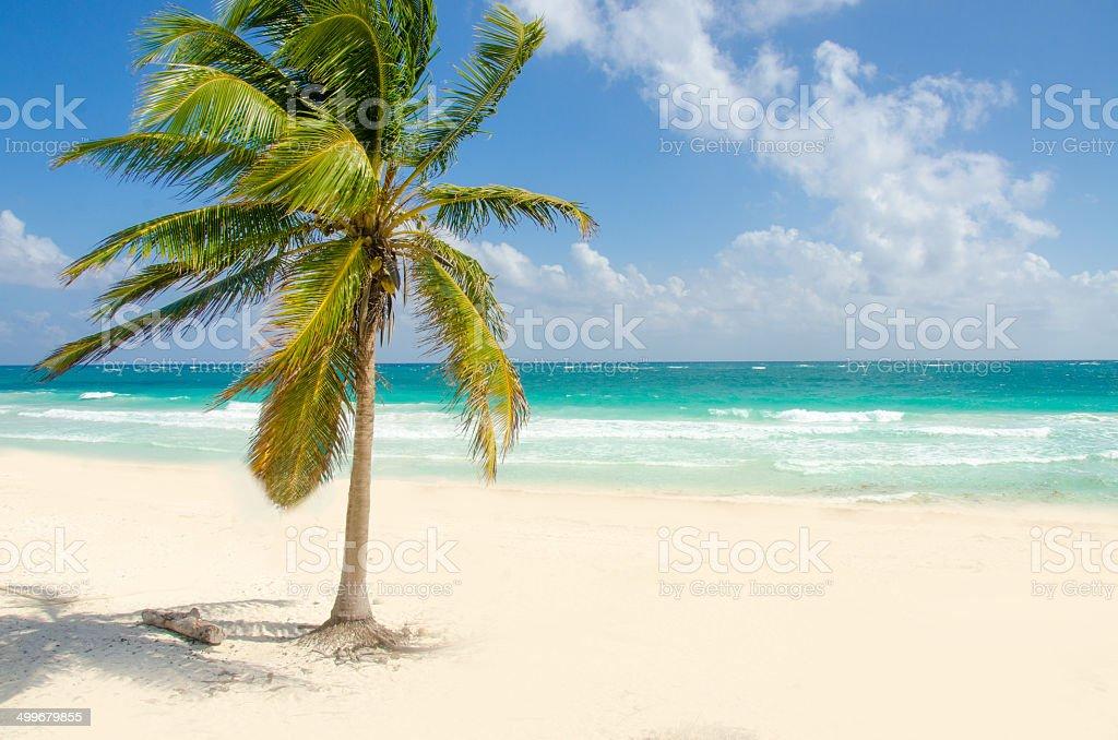 Wild Beach at Tulum stock photo