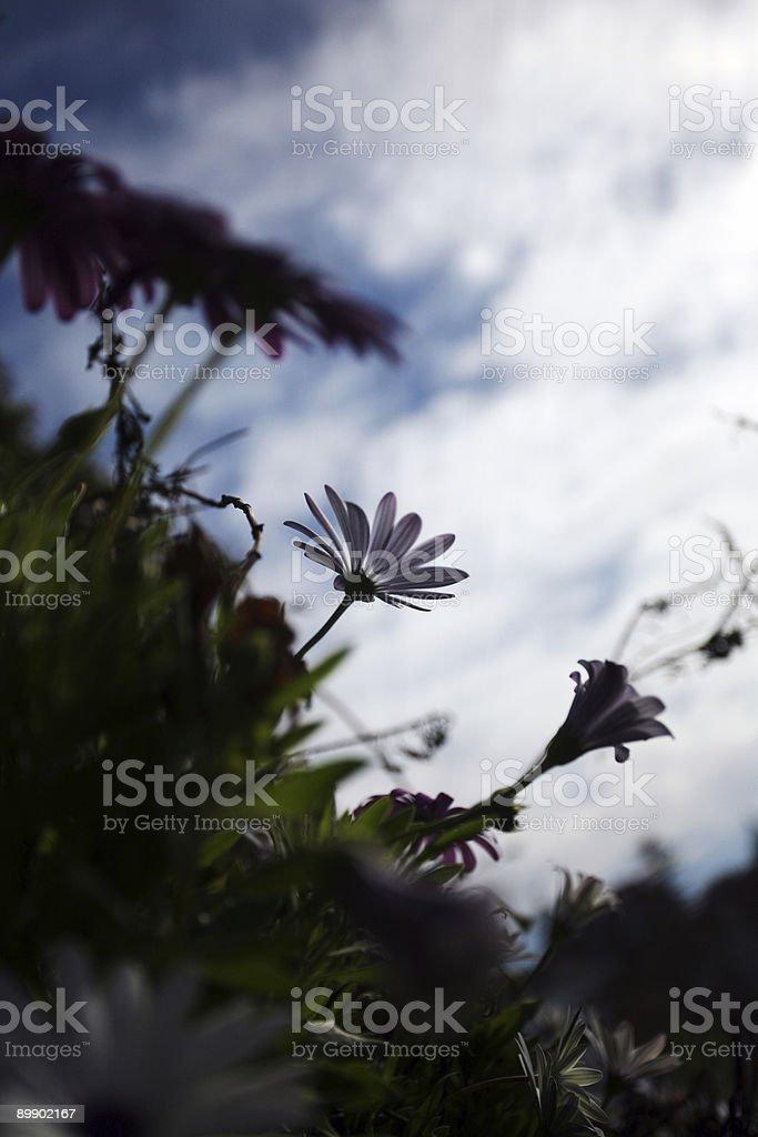 wild beach flowers royalty-free stock photo