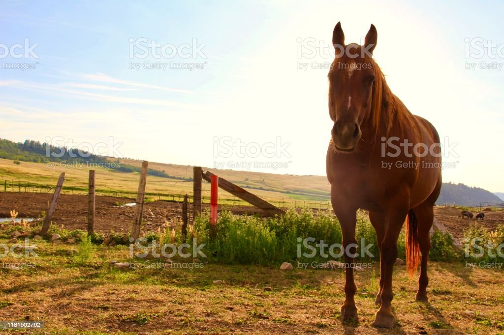 Wild Beautiful Horse Stock Photo Download Image Now Istock
