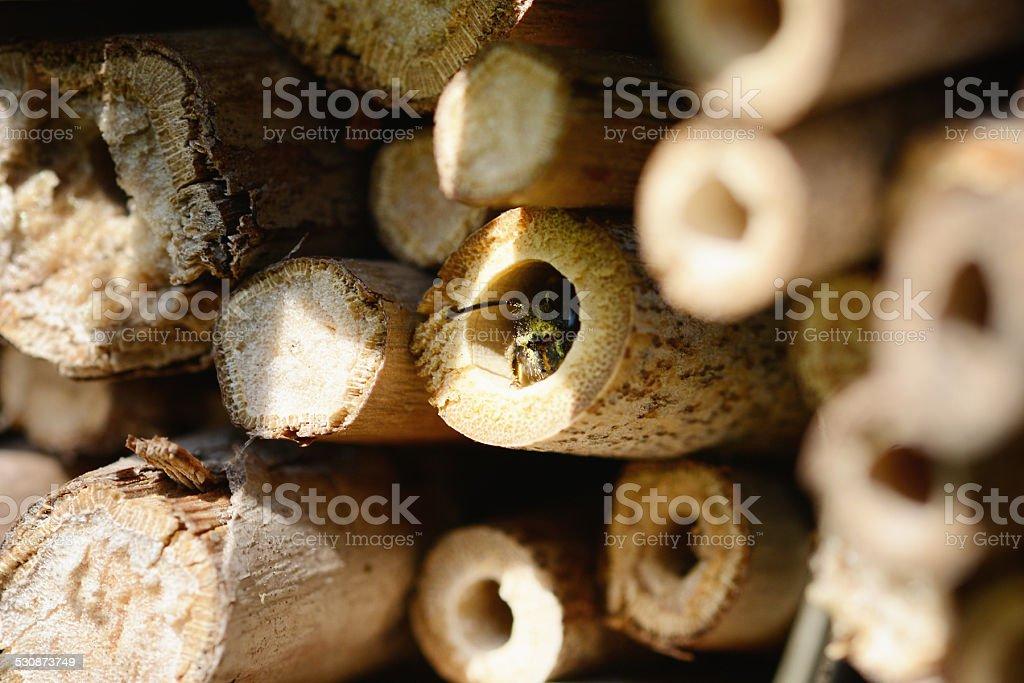 Nid d'abeille sauvage dans l'Abri anti-insectes - Photo
