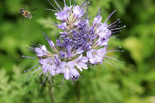 Wilde Bijen Zijn Alle Bee Soorten Uit De Superfamilie Stockfoto en meer beelden van Bij