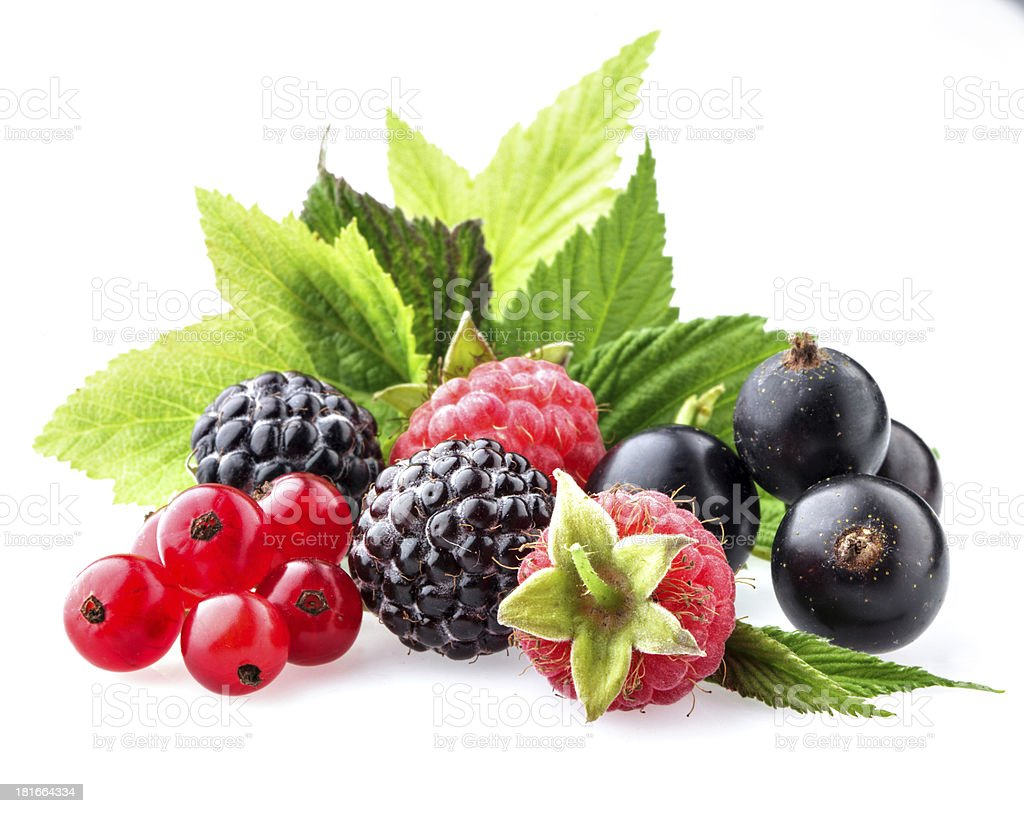 Wild berries with leaves royalty-free stock photo