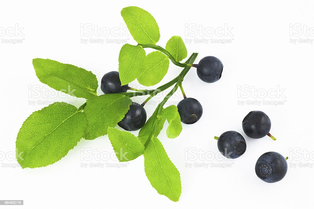 Wild berry fruits royalty-free stock photo