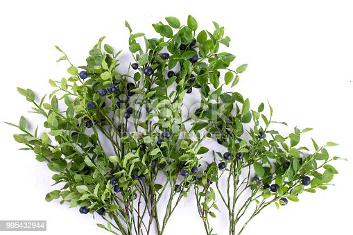 853493518 istock photo Wild bilberries or blueberries  and the branch of an blueberries bush 995432944