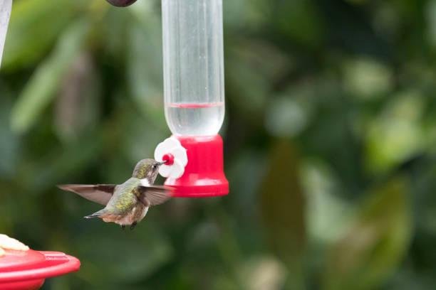 從世界各地飛行的野鳥圖像檔