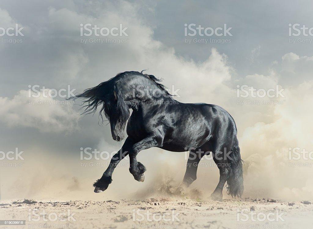 Wild black stallion stock photo