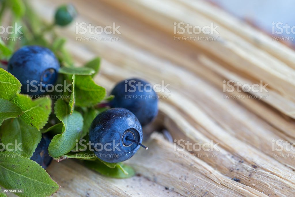 Wild blue berries foto