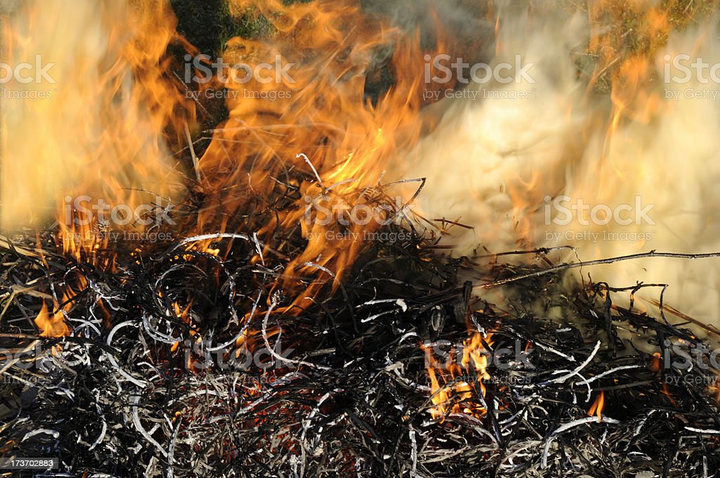 Wild Brush Fire royalty-free stock photo
