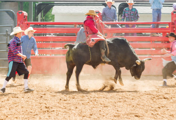 Royalty Free Bull Riding Pictures Images And Stock Photos