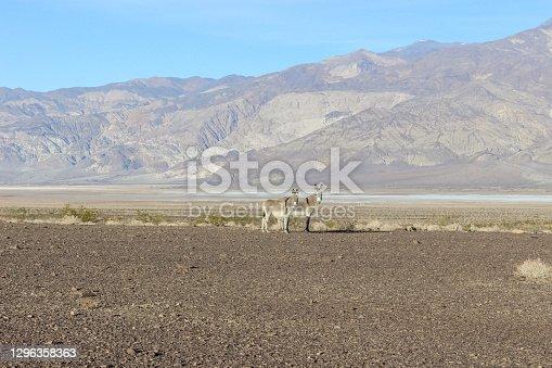 Milky way raising over Zabriskie Point in Death Valley