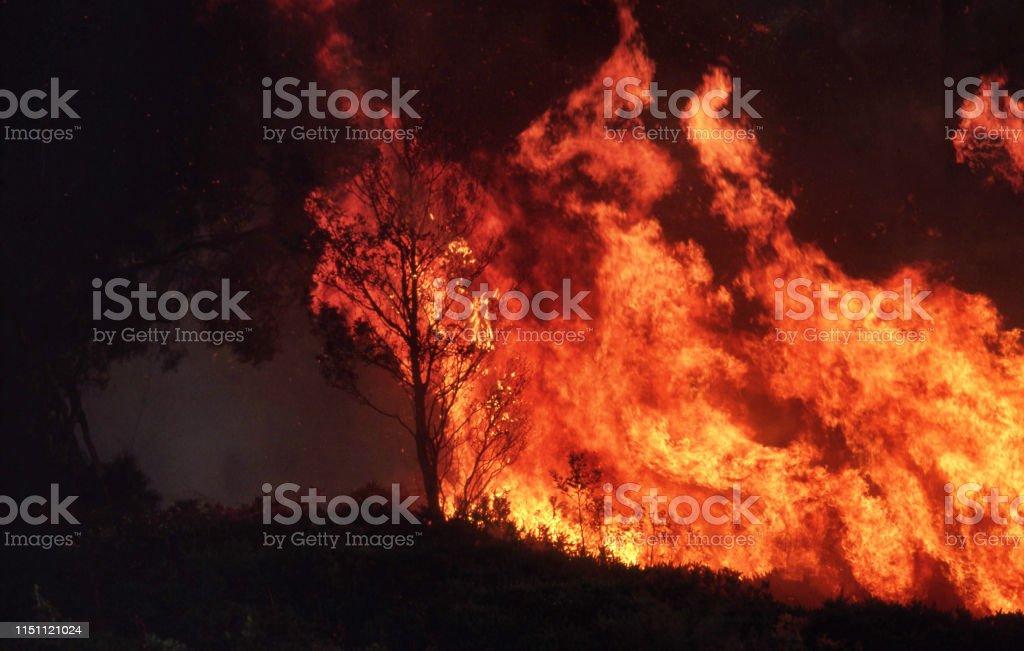 Wilde Bushfire branden uit de hand - Royalty-free 1990-1999 Stockfoto
