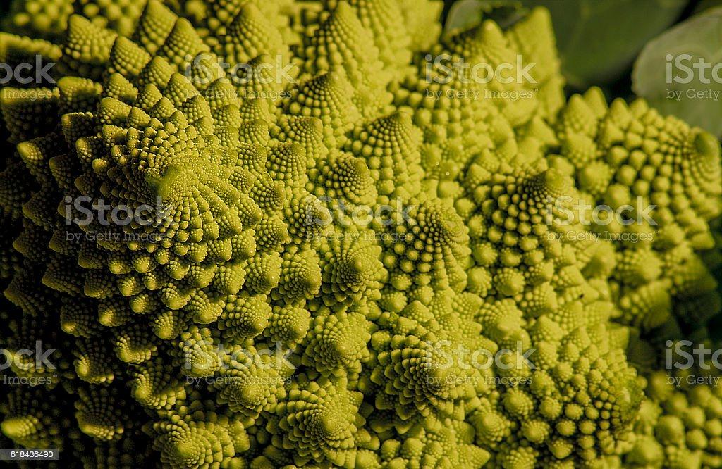Wild cabbage stock photo