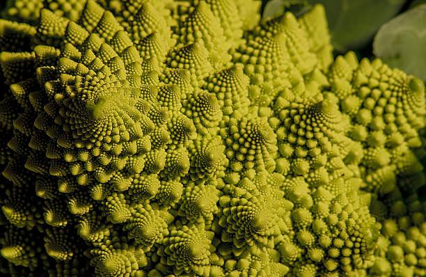 дикая капуста - golden ratio стоковые фото и изображения