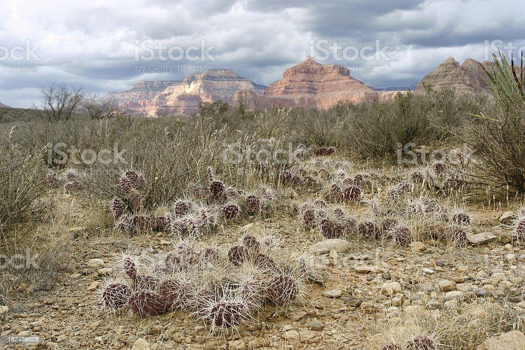 Wild cactus al jardín foto de stock libre de derechos