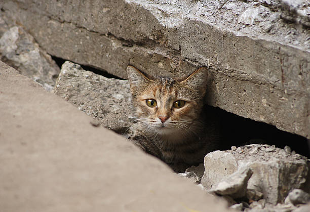 Wild cat hid under the tiles of the road Frightened wild cat hid under the tiles of the road ambush stock pictures, royalty-free photos & images