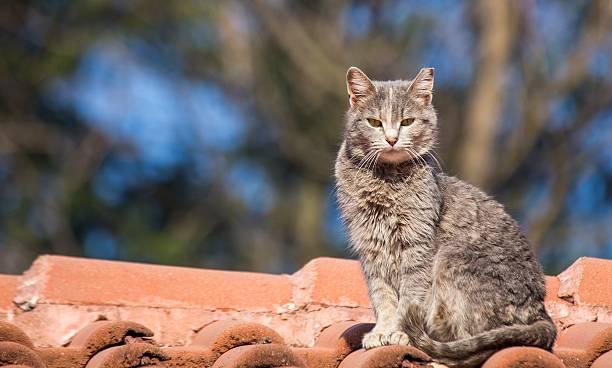 Wild cat picture id533195131?b=1&k=6&m=533195131&s=612x612&w=0&h=vgxmei9jvxqmjv2mwzyn3junw9gtnaa8mpm7547twni=