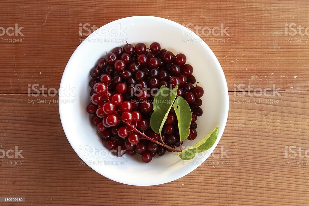 Wild chokecherry (Prunus virginiana) fruit in a white bowl. stock photo