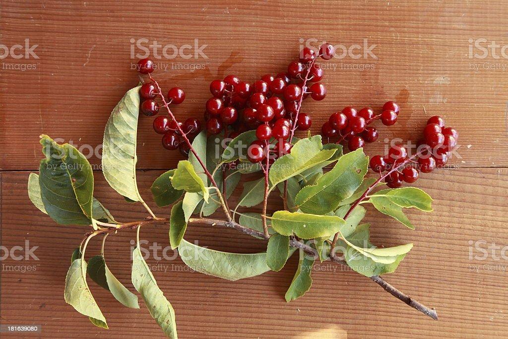 Wild chokecherry (Prunus virginiana) fruit on a cedar background. stock photo