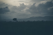 Dramatic cloudscape and scenery during a rainy day in the beautiful Serengeti National Park in Tanzania, Africa