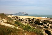 beautiful wild long stretch of sand beach on the wavy coastline north of Mui ne village, Binh Thuan province - Vietnam