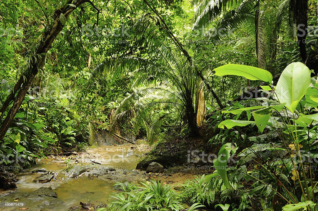 Wild Colombian Darien jungle stock photo