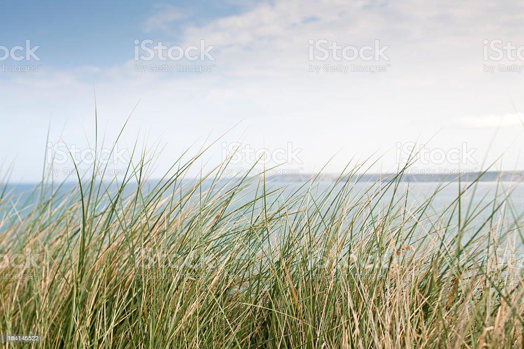 Wild Cornish Cliff top grasses stock photo