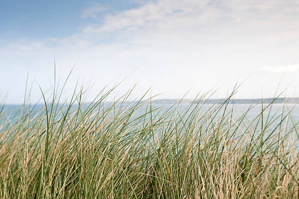 wild cornish cliff top grasses - cornwall stock pictures, royalty-free photos & images