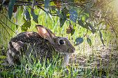 Young wild rabbit close up enjoying the sunshine