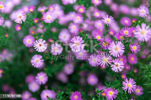 Wild daisy background