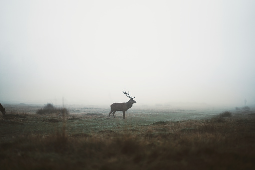 Wild deers in the morning time