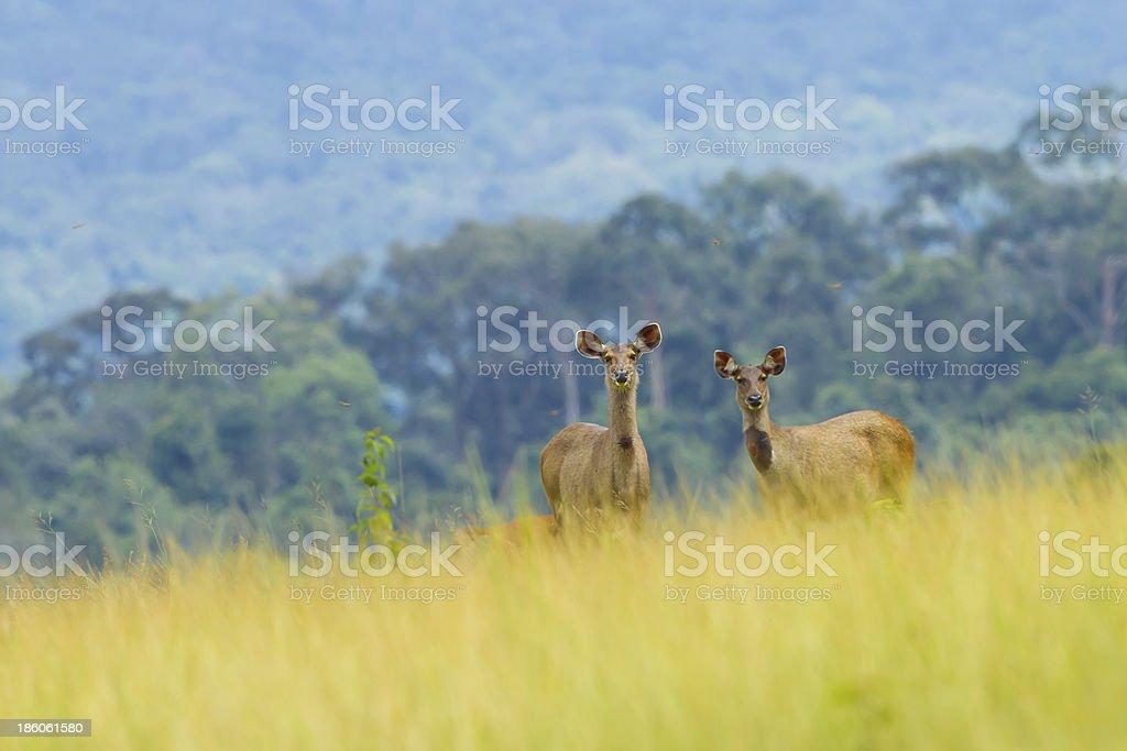 Wild deers post in beautiful landscape stock photo