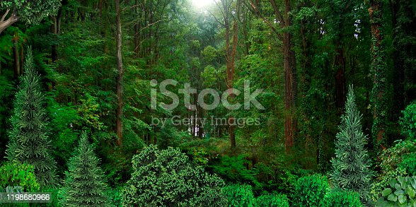Wild dense forest natural banner. Wildlife and trees. Taiga Wallpaper Background