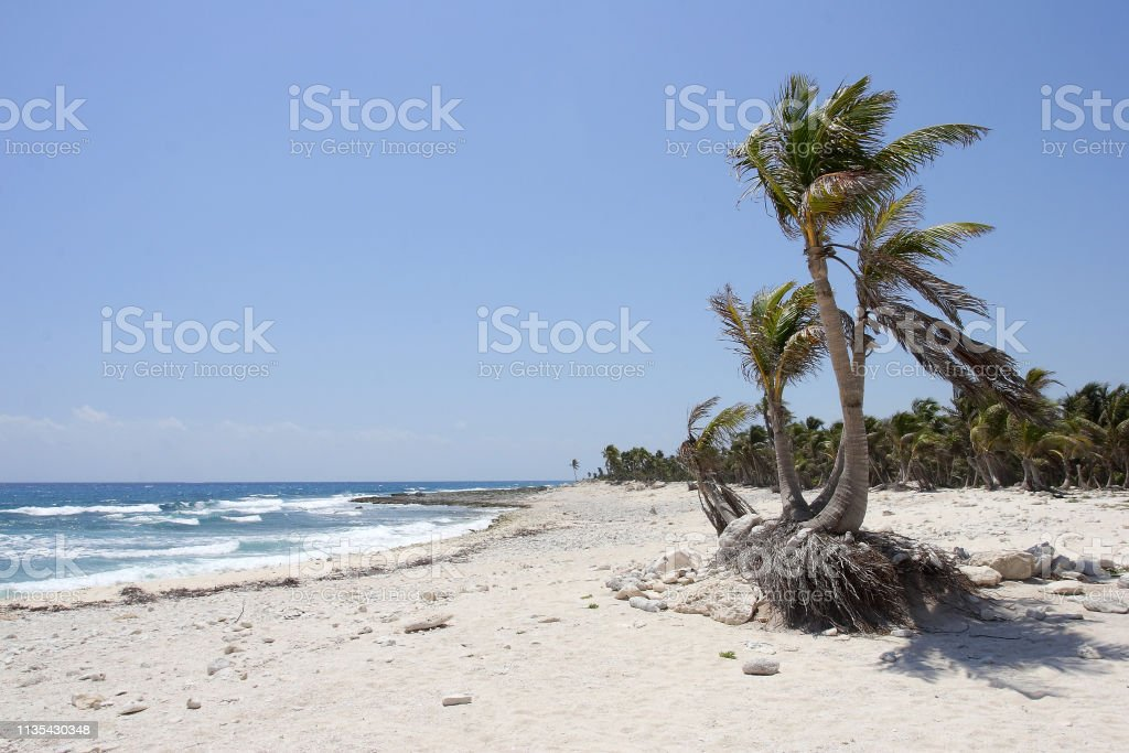Wild deserted tropical beach in summer stock photo