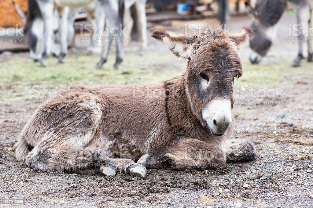 Wild donkey is in a small town. - foto de acervo