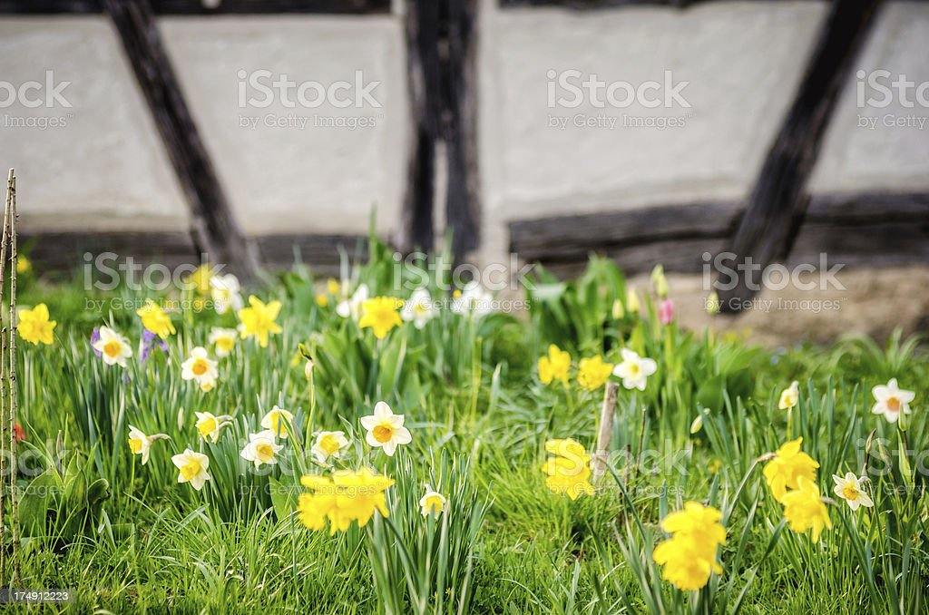 Wild Easter Meadow royalty-free stock photo
