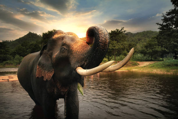 Wild elephant in the beautiful forest at Kanchanaburi province in Thailand, (with clipping path) stock photo