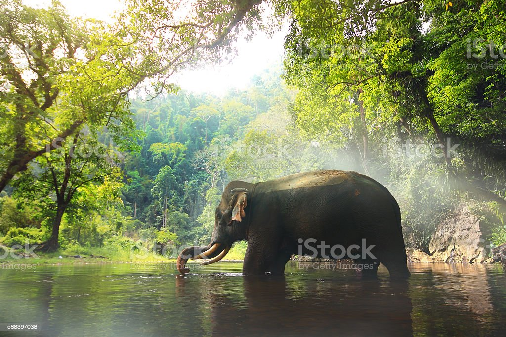 Wild elephant in the beautiful forest stock photo