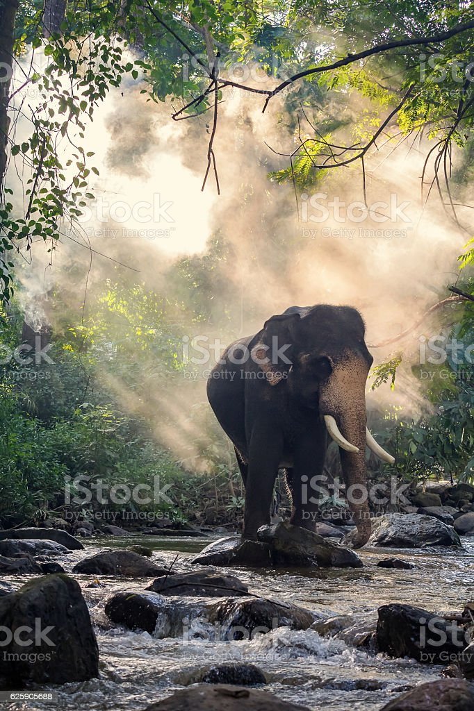 Wild Elephant In The Riverimage Contains Grain And Noise