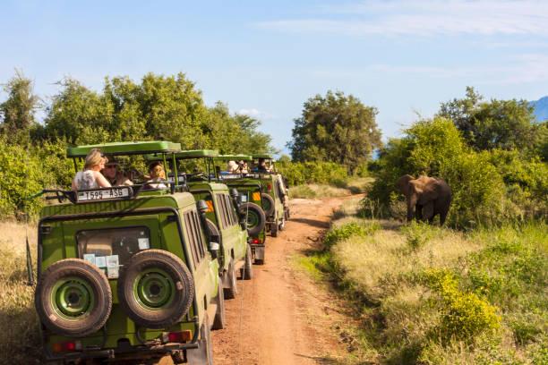 Wild Elephant on the Move stock photo