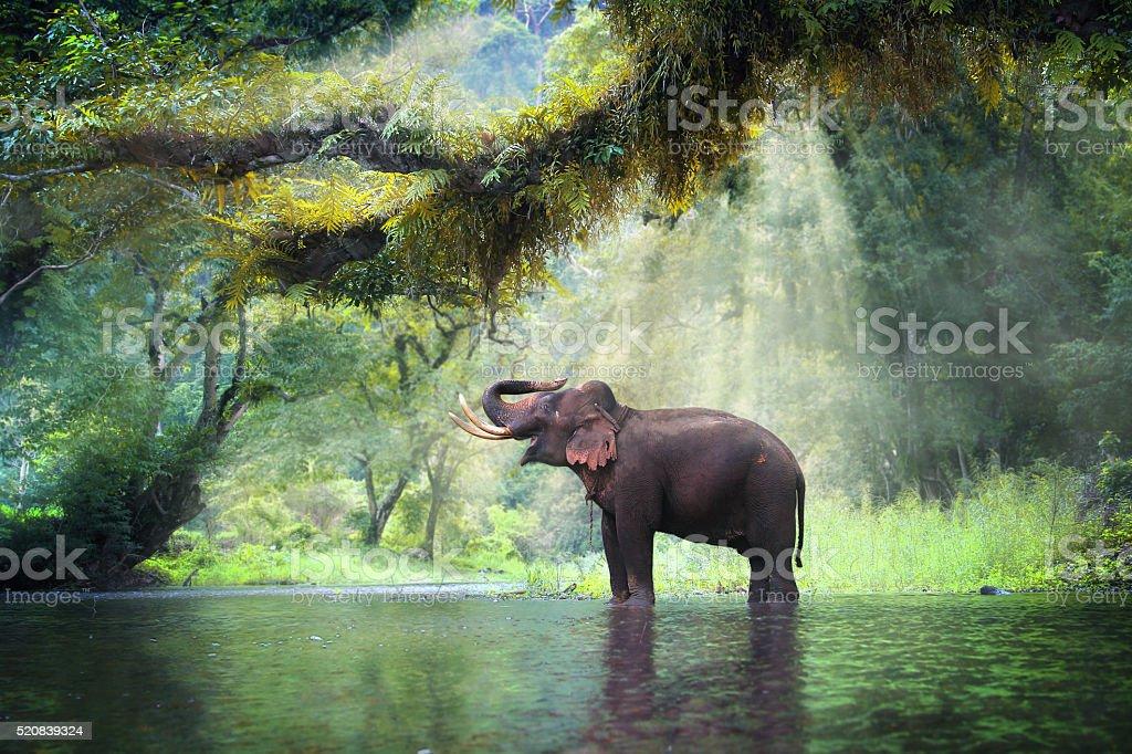 Wild-Elefanten Lizenzfreies stock-foto