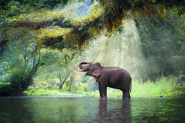 Wild elephant Wild elephant in the beautiful forest at Kanchanaburi province in Thailand, (with clipping path) wildlife reserve stock pictures, royalty-free photos & images