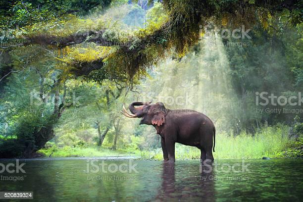 Photo of Wild elephant