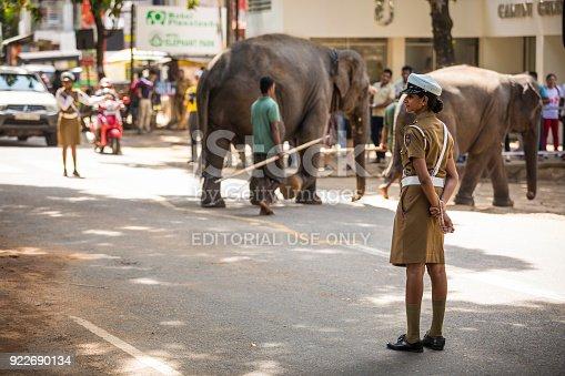istock wild elephants crossing the street 922690134