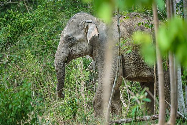 Wild Elephants in forest of Kuiburi National Park, Prachuabkirikhant, Thailand – Foto